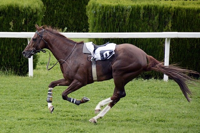 Залагането на конни надбягвания на bet365